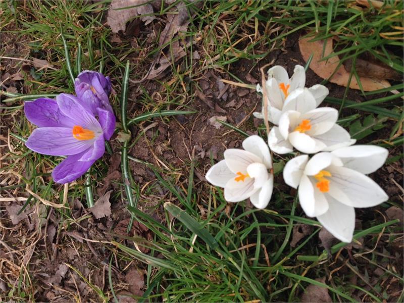 Der Frühling beginnt im Frühlingstal