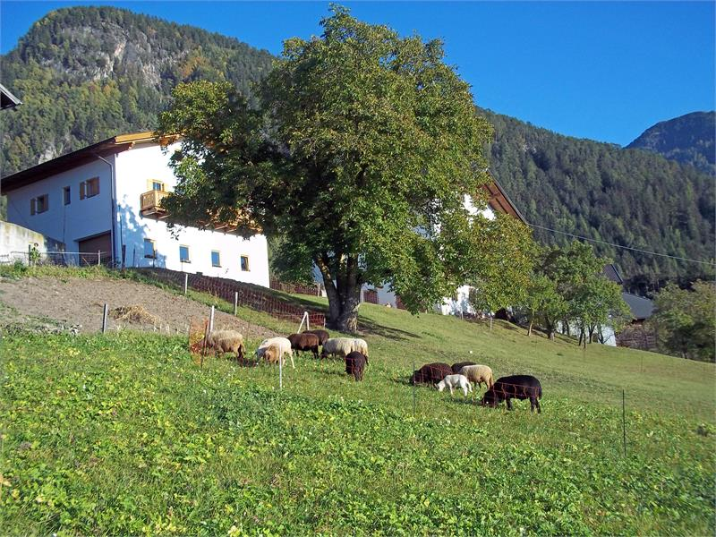 Unsere Schafe im Herbst