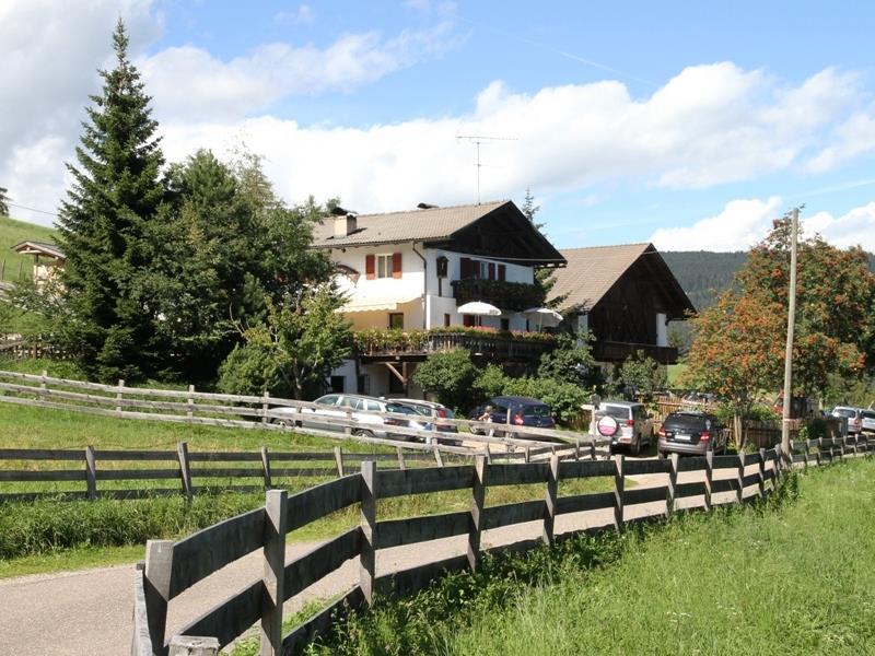 Lanzenschuster in estate