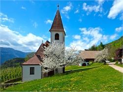 Chiesa parrocchiale del Santo Martino di Cologna