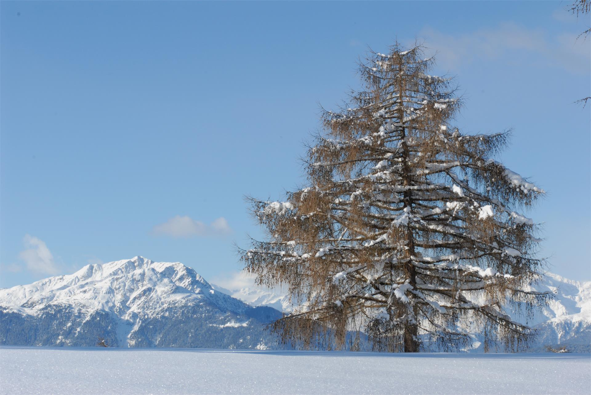 Excursion with snowshoes: Tomanegger - Salten