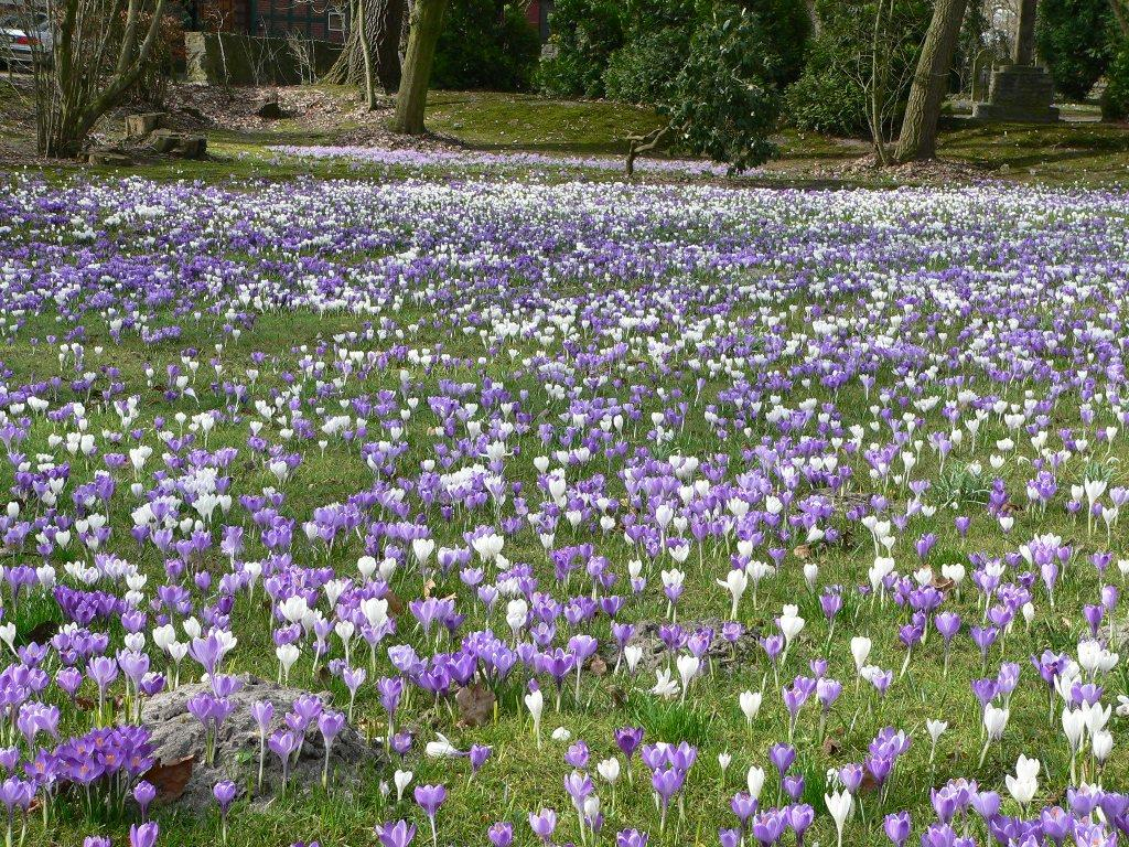 fiori in primavera
