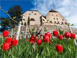 Winery Schloss Englar