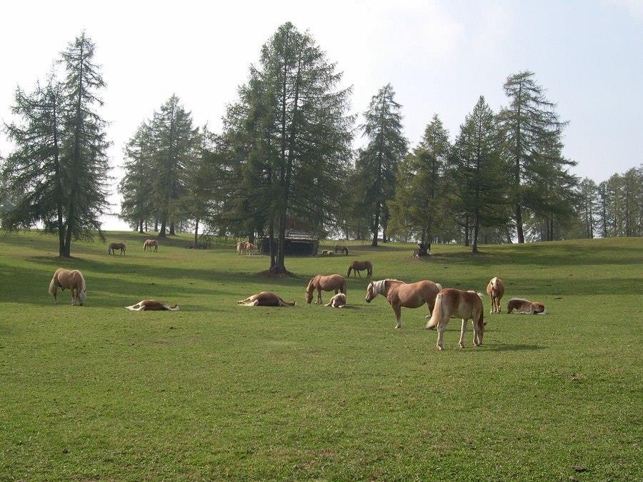 Rundweg: Jenesien - Tschaufen - Salten