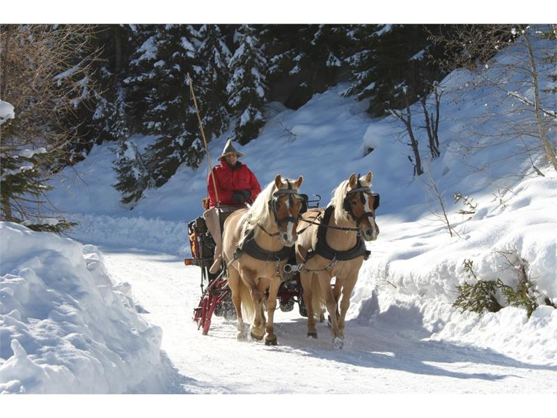 In winter sleigh rides with the Haflinger horses
