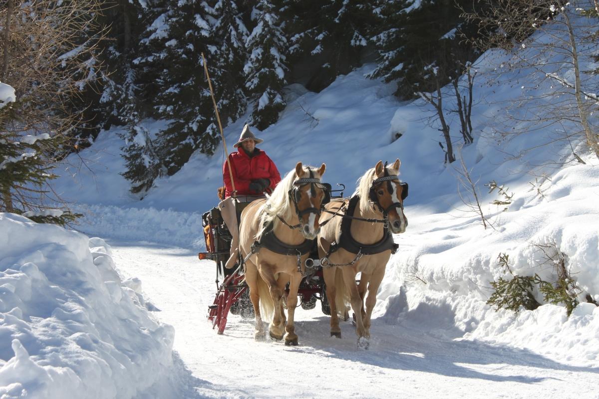 Pferdeschlittenfahrten im Winter mit Haflinger Pferden