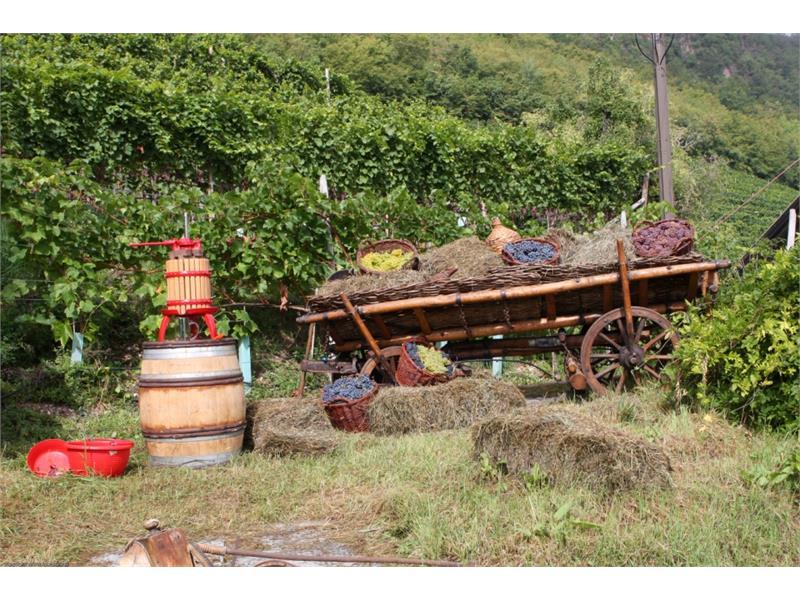 Weinsorten und Weinpresse