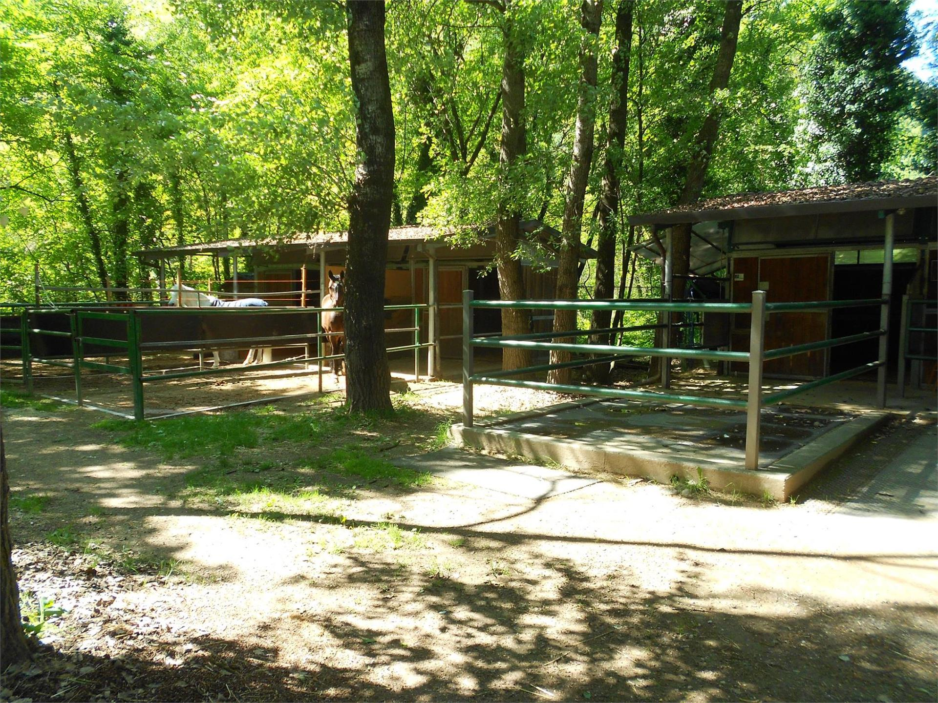 Horse riding stable in Nalles