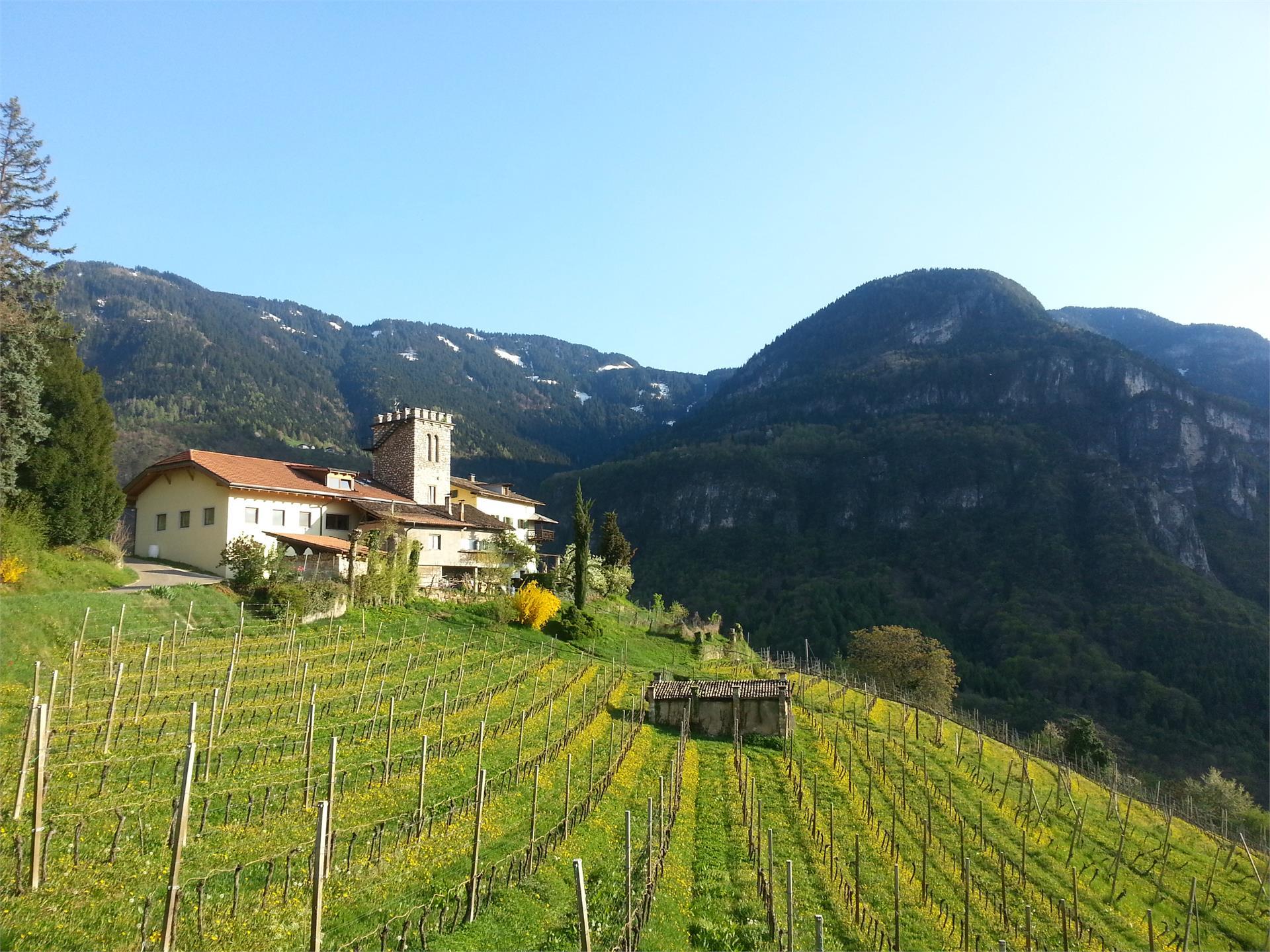 Winery Maso Thaler
