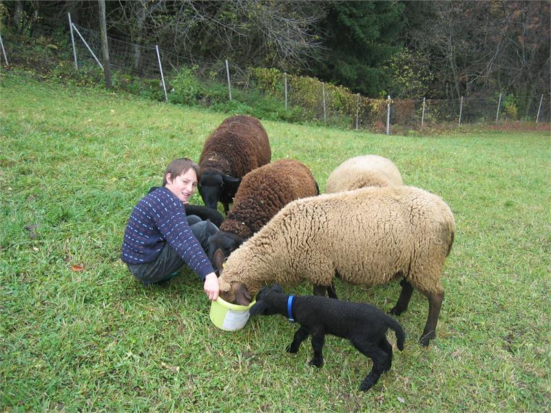 mithelfen beim Tierefüttern