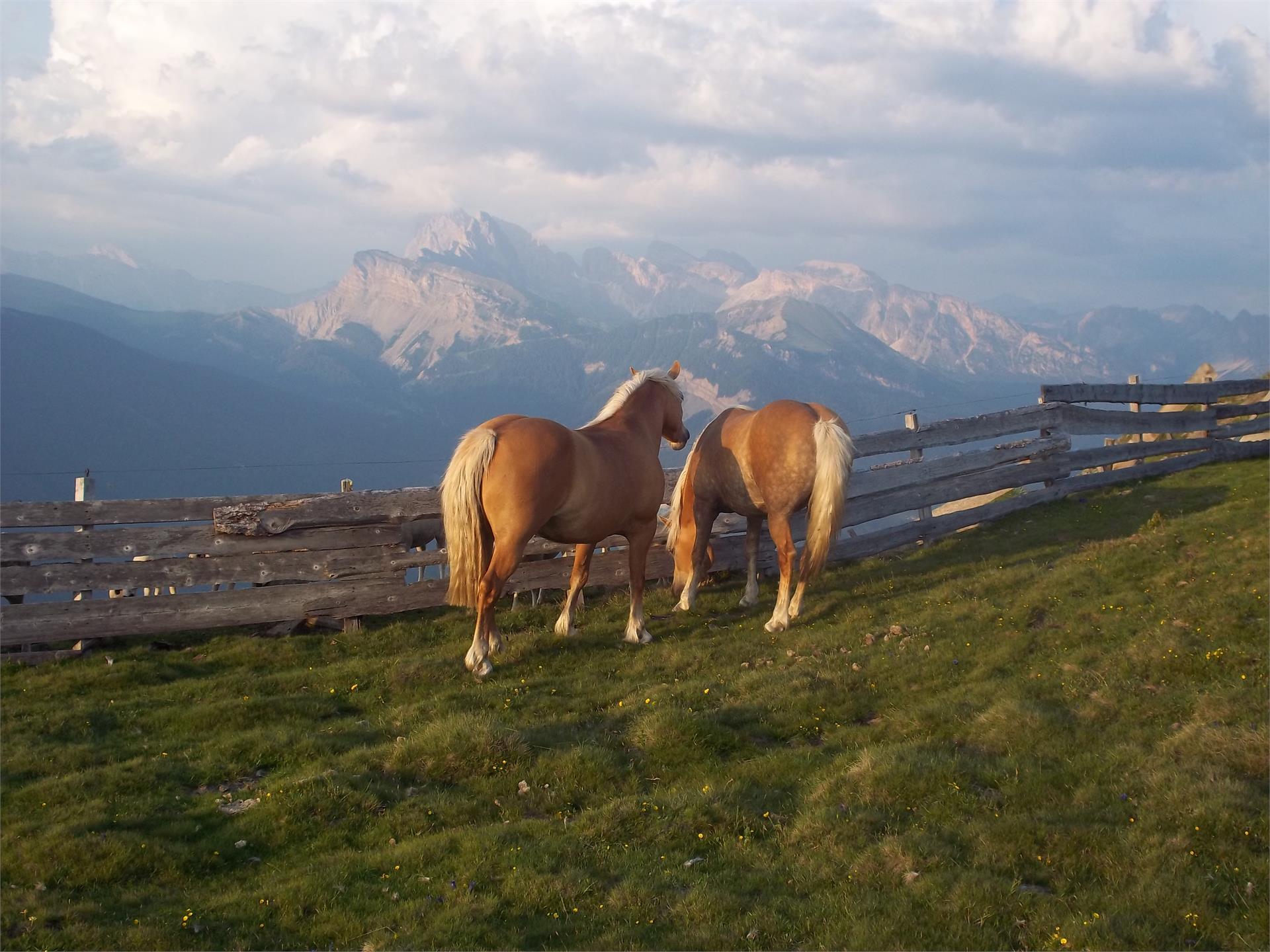 Pferde auf dem Puflatsch