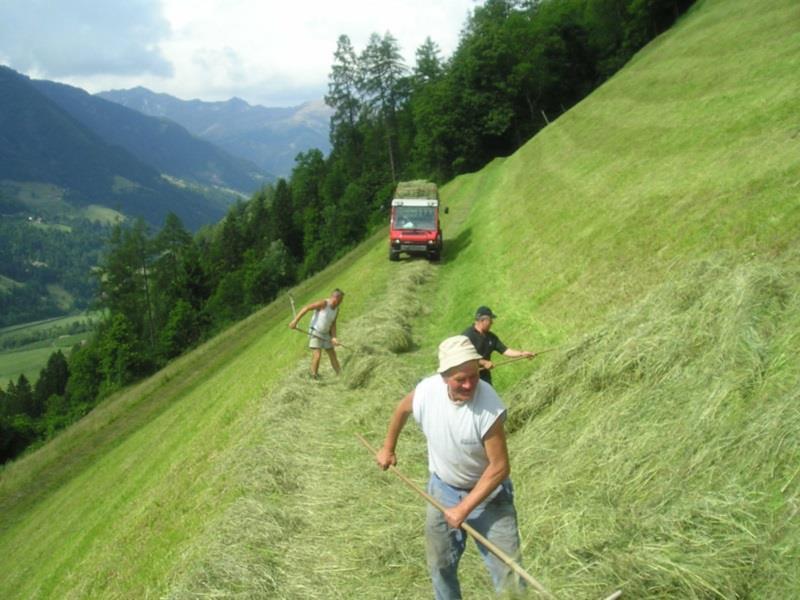 Work on hay