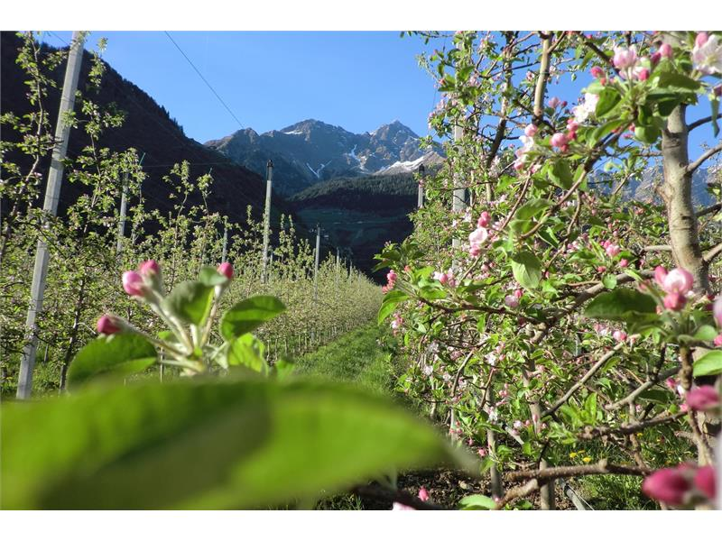 The view at the apple trees
