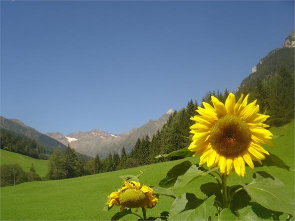 Sommer in Pflersch