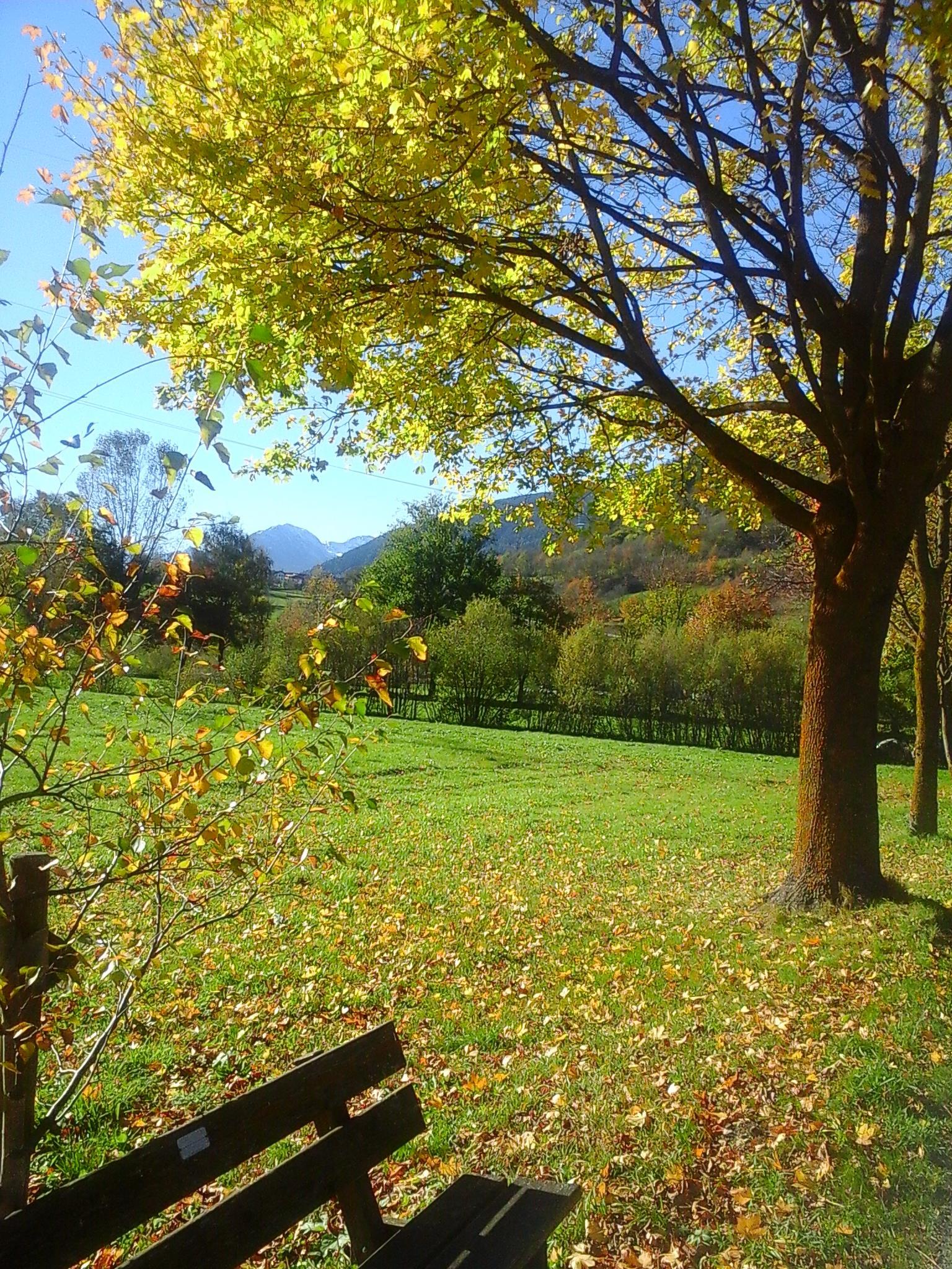 Herbstimpression von Wiesen