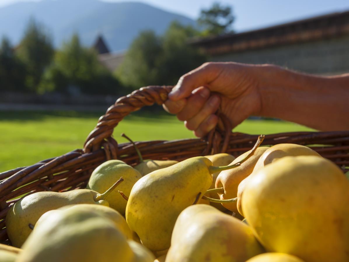 Giornate della pera Pala: Palabirasunnta
