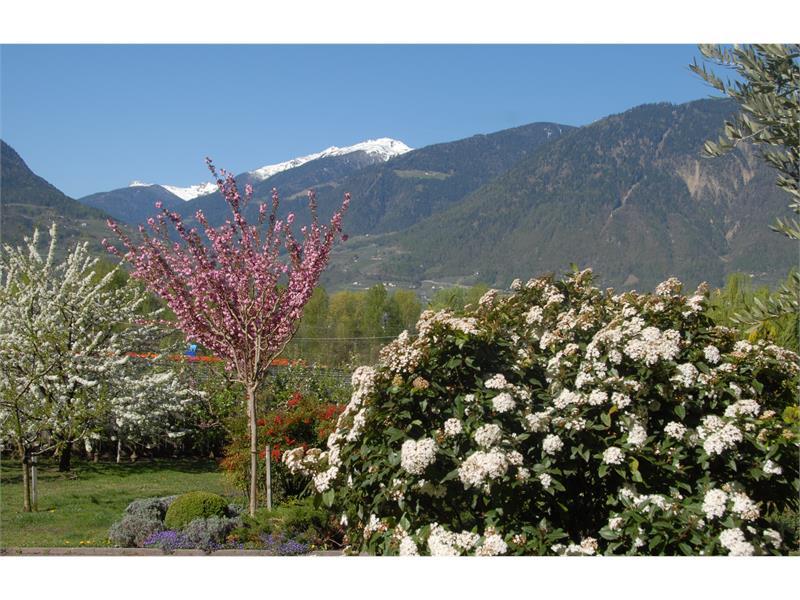 il nostro giardino in primavera