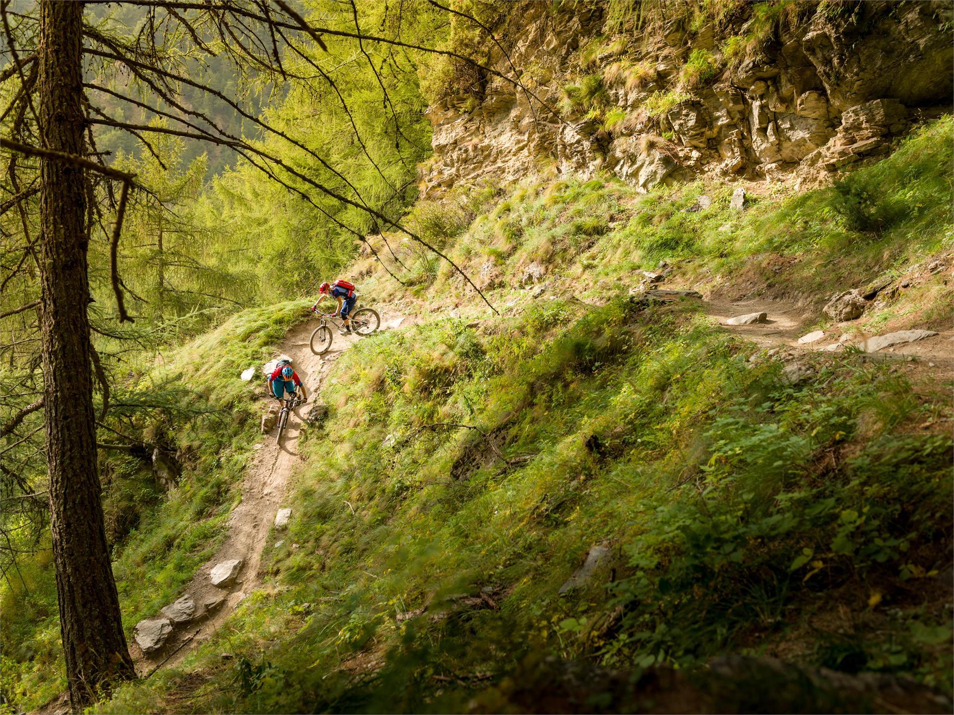 Malga di Tarres-Trail