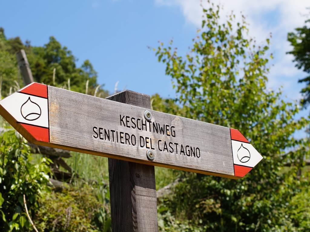 Sentiero del castagno da Velturno a Chiusa