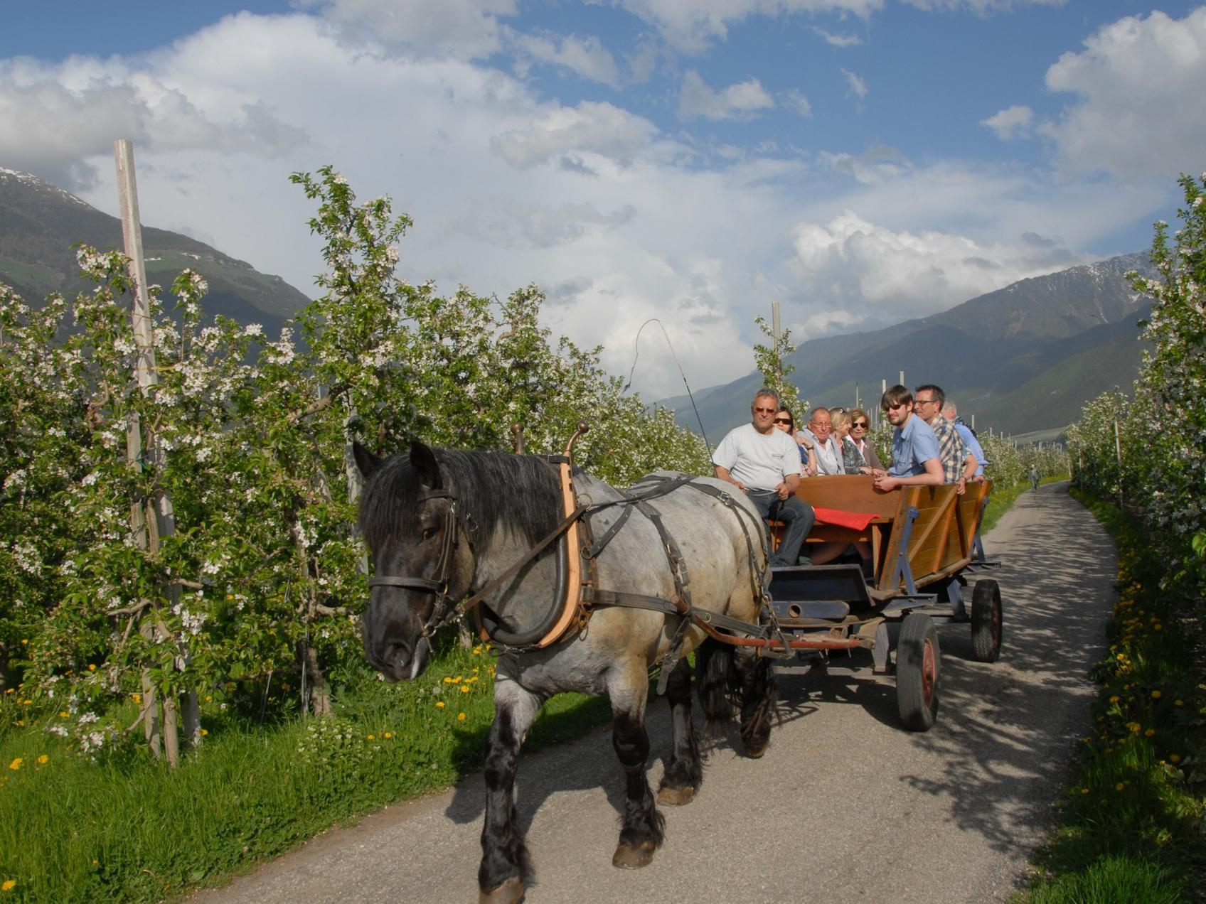 Carriage drive through the apple gardens