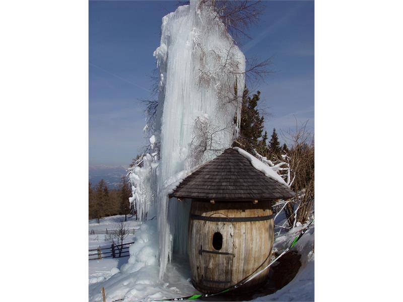 ...wenn wir Eis auf die Birke machen..