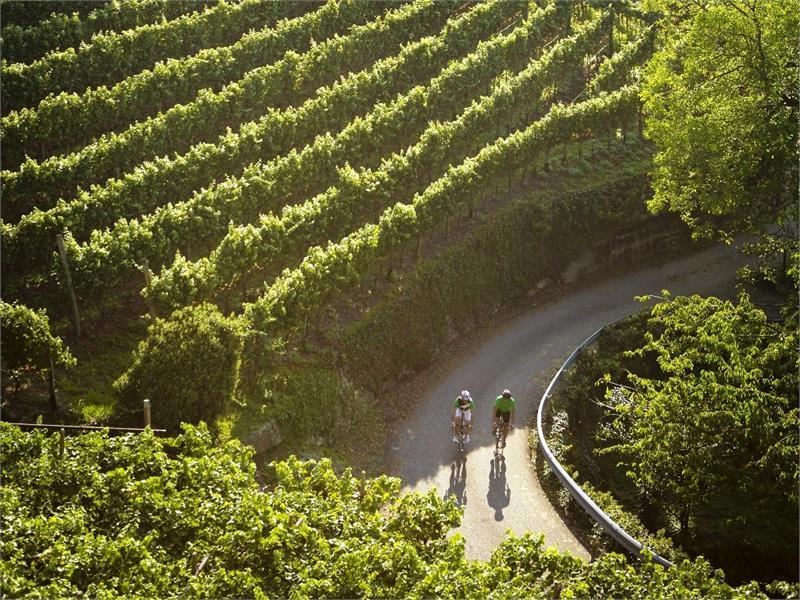 Radfahren inmitten der Weinreben