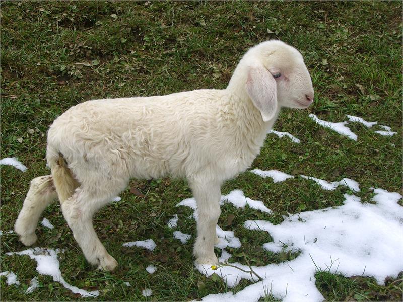 Tumlhof - Agriturismo, agnello