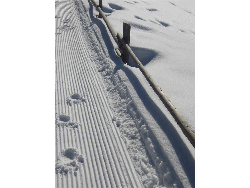 Impronte nella neve