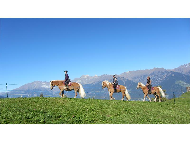 Riding stable Sulfner in Avelengo/Hafling