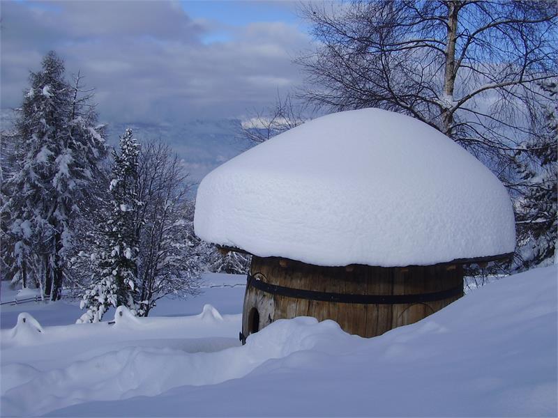 Schneepilz