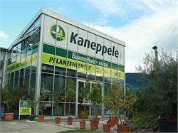 Kaneppele - Baumschule