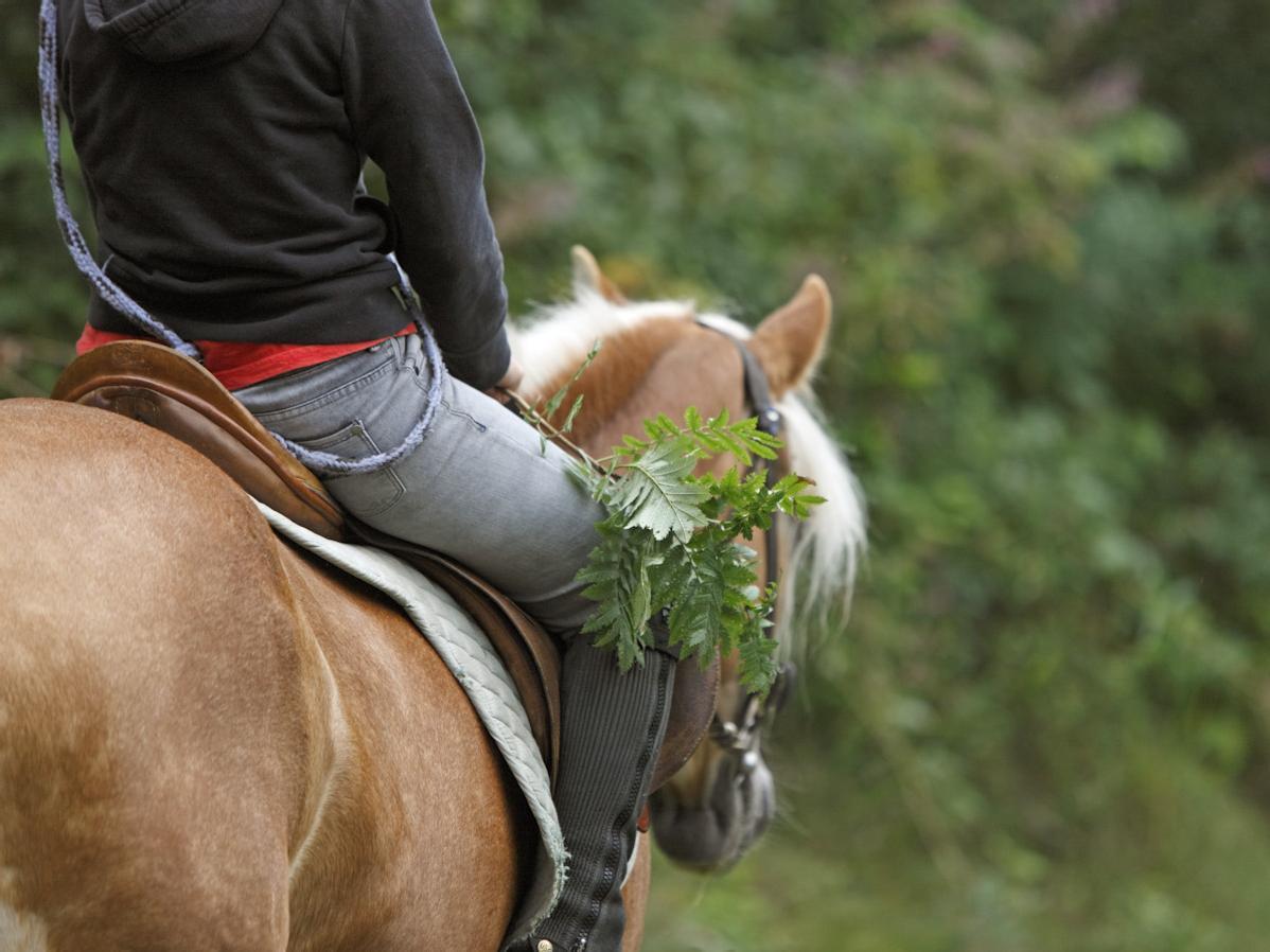 Scuola di equitazione Verano