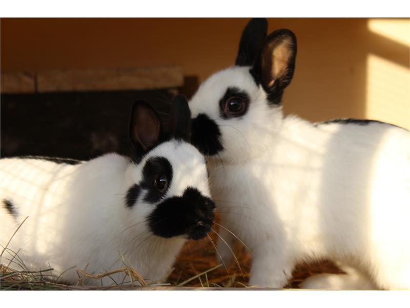 I coniglietti al Krosshof
