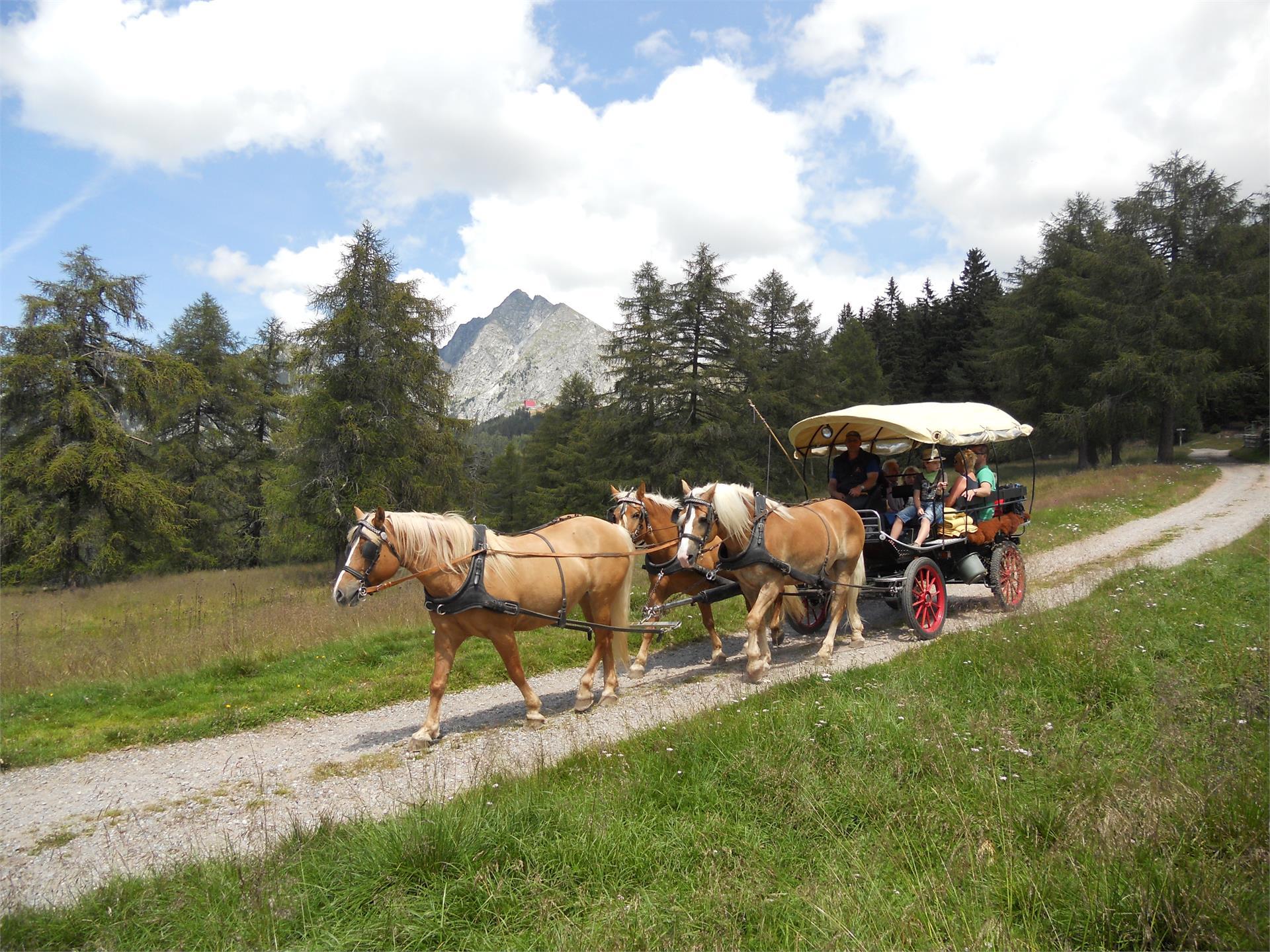 Kutschenfahrten mit Haflinger Pferden