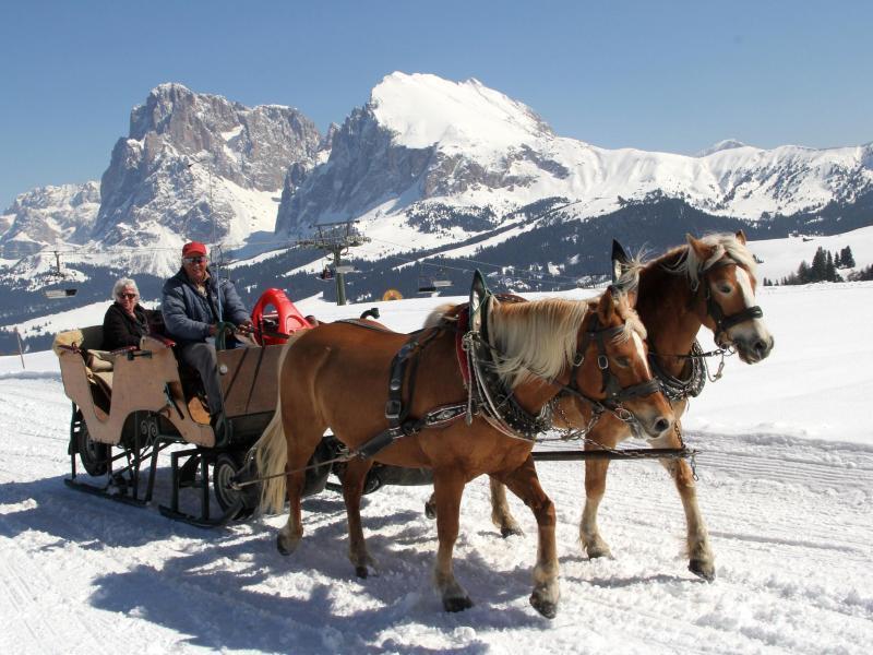 Slitta trainata da cavalli in inverno