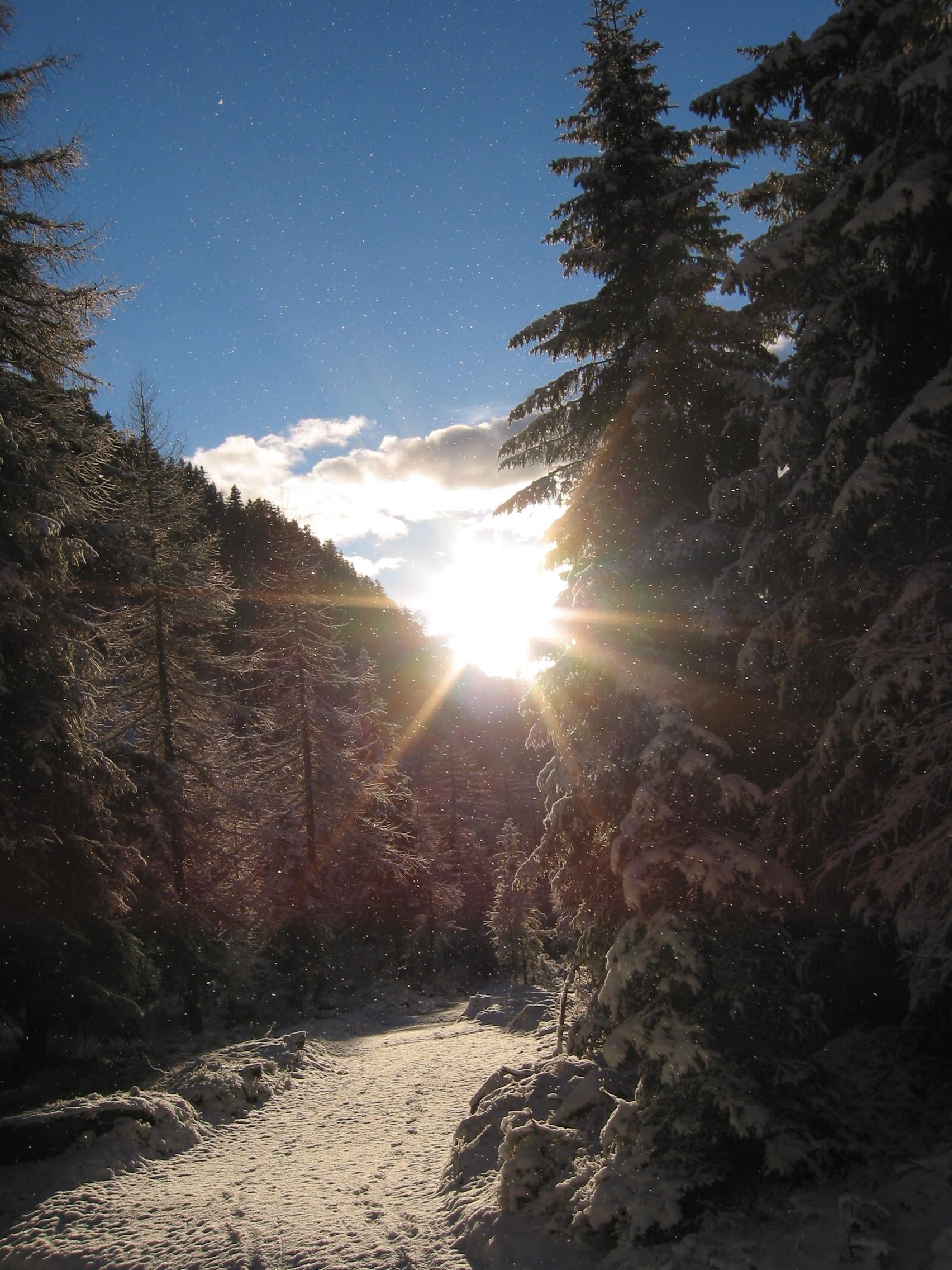 Schnee-Rundwanderung zur Moschwaldalm