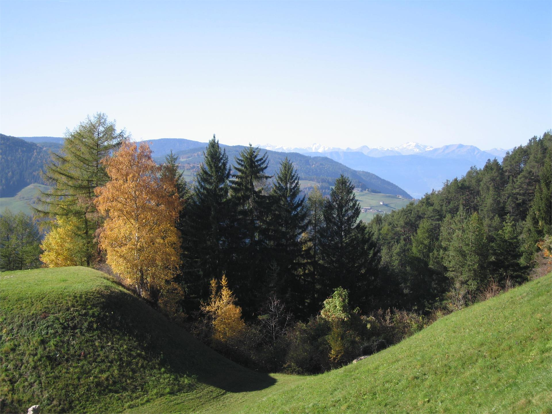 Thalerbühel