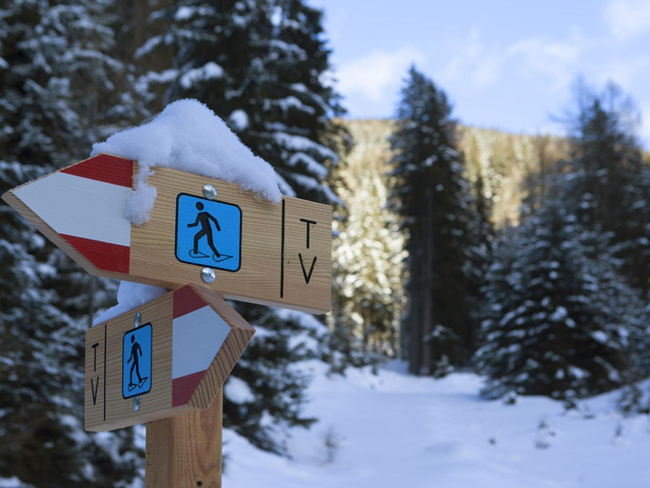 Schneeschuhwanderung im Fichtenwald
