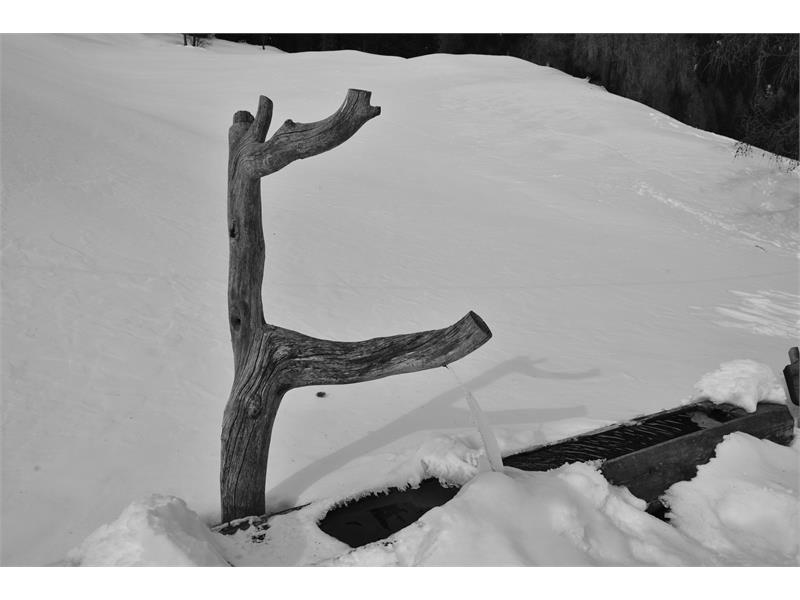 Winteremotion