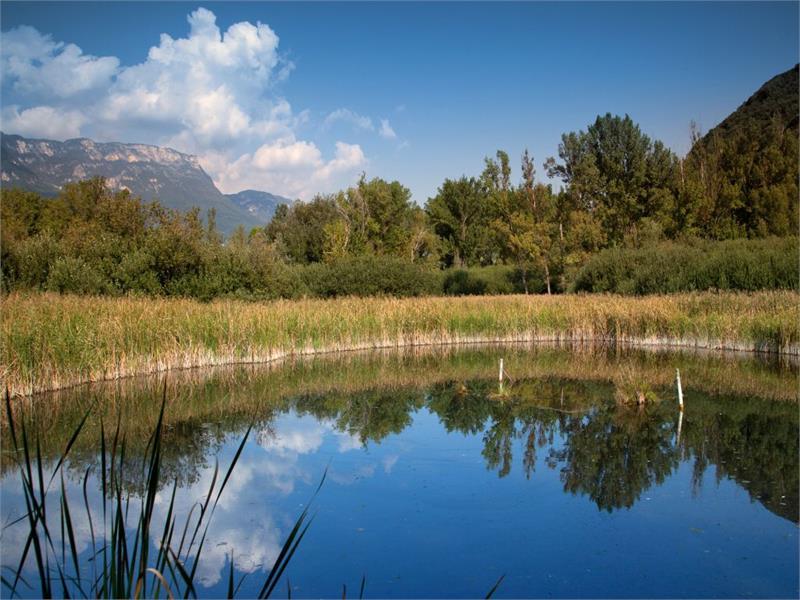 The habitat at the Lake Kaltern