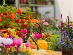 Mercatini sotto i portici: mercato dei fiori e giardinaggio