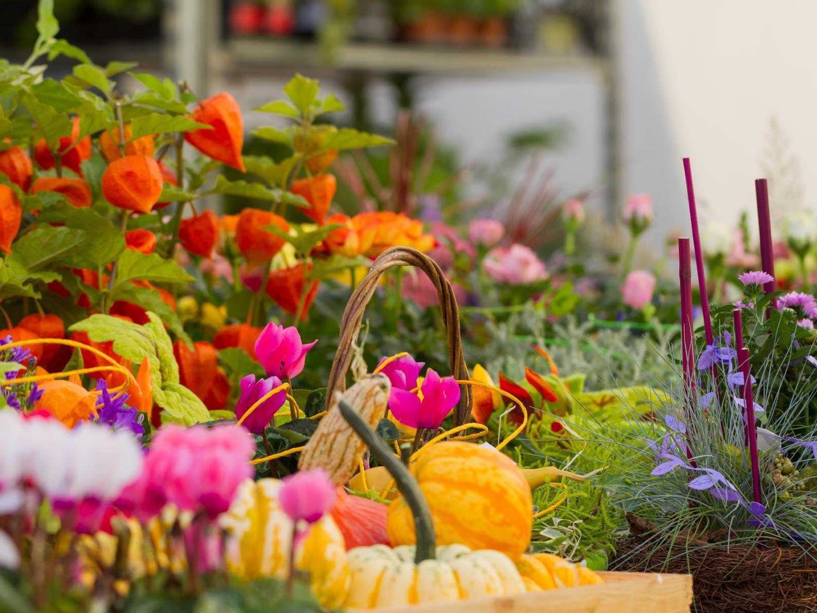 Glurnser Laubenmarkt: Blumen- und Gartenmarkt