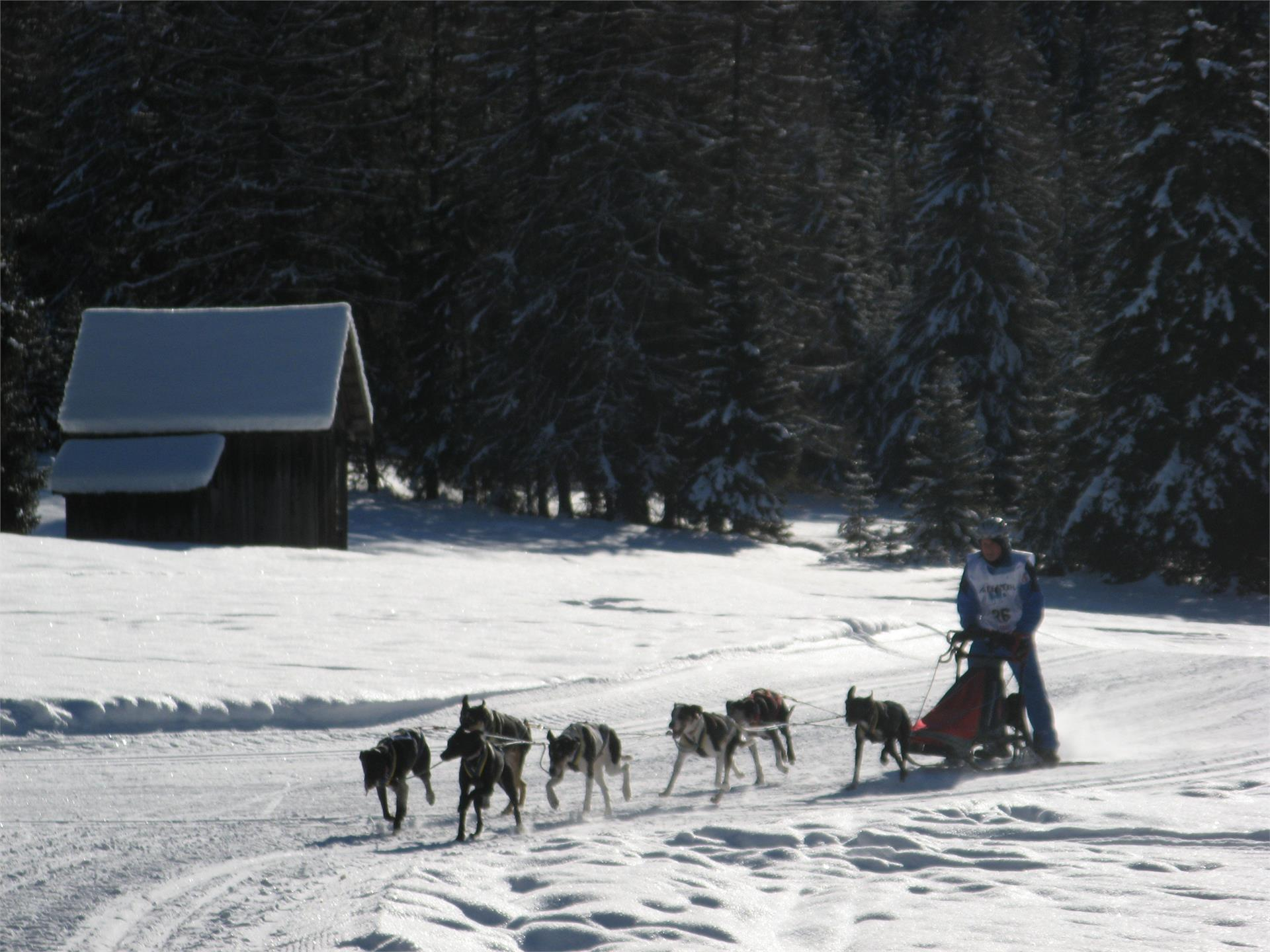 Alpentrail - gara internazionale sledge dog