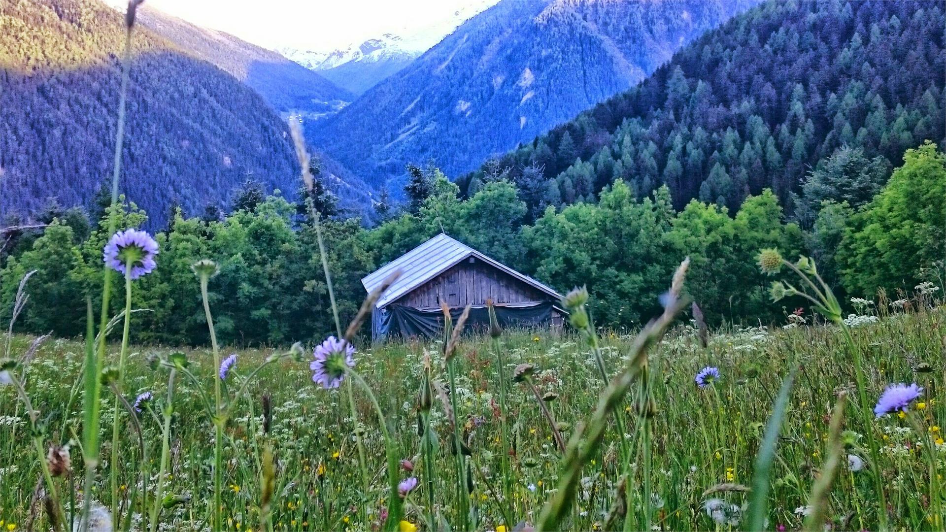 idyllische Bergwiesen oberhalb von Stilfs