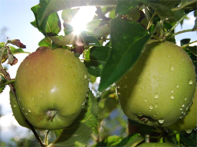 Sentiero delle mele a Naz-Sciaves