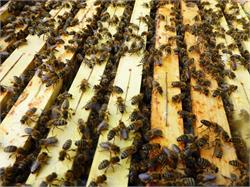 Beekeeping Plattner Hannes