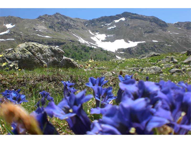 Ultner Bergwelt im Sommer
