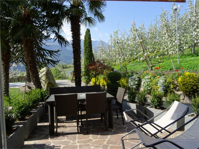 Terrasse Gartenrose