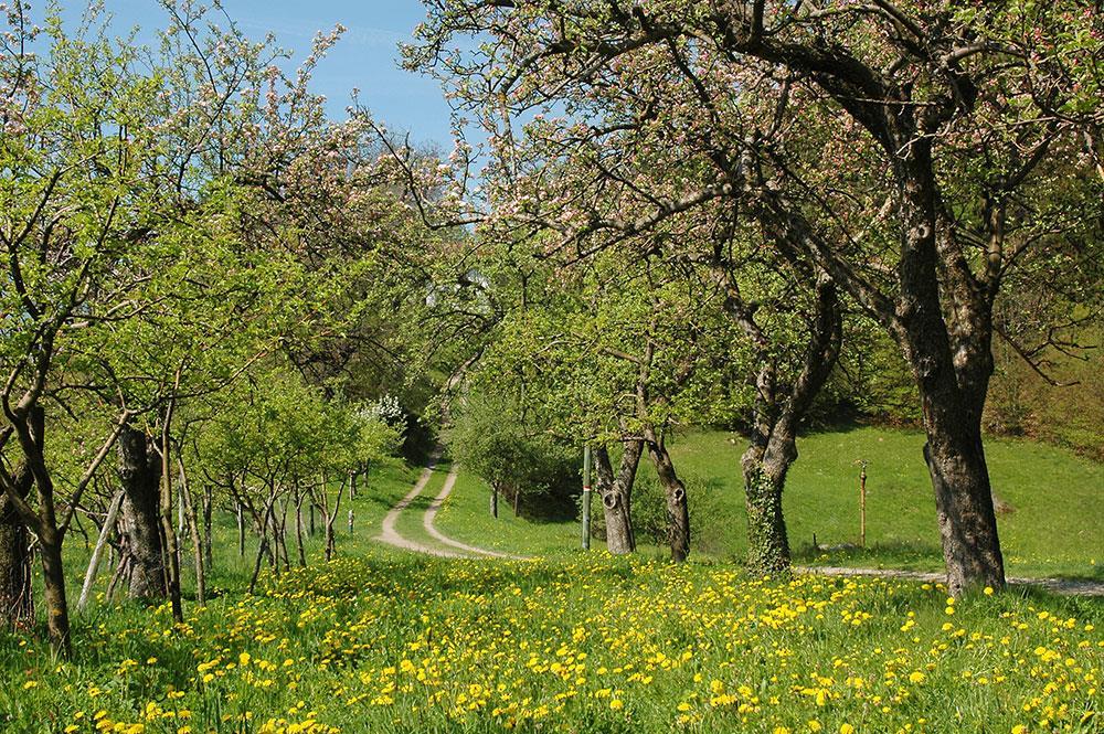 Albergo Gasteiger Velloi Alto Adige ambiente