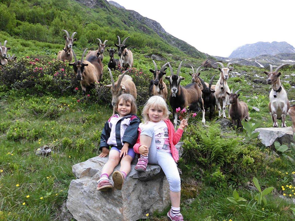 capre e capretti